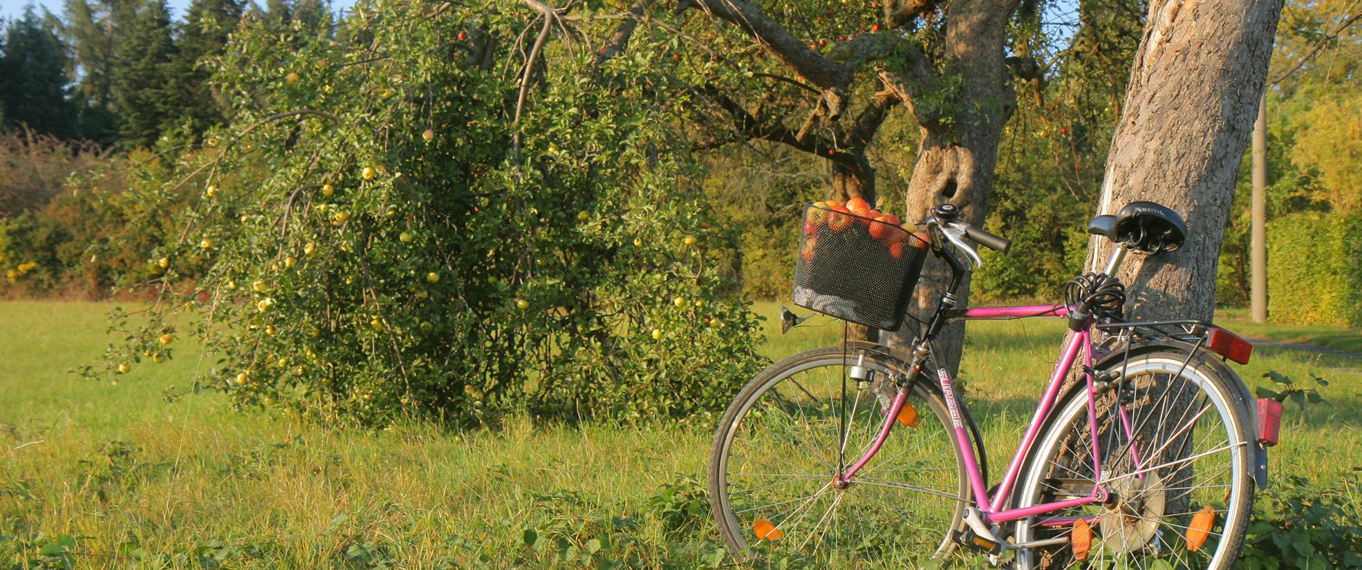 Herbst im Vogelsberg ist Apfelzeit
