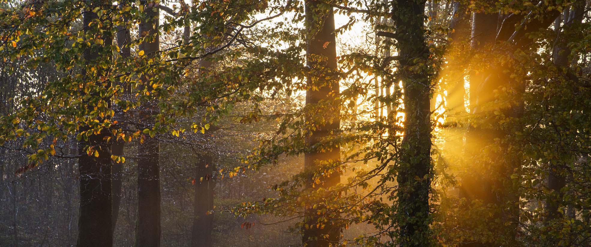 Die Sonne strahlt durch den herbstlichen Wald