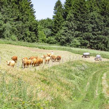 Radwanderung im Vogelsberg - Landgasthof Porta