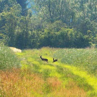 Wanderung im Naturpark Vogelsberg